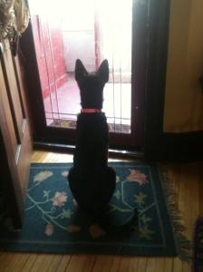 Shya t front door