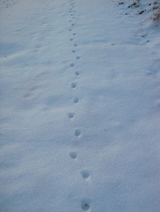 SnowPrintTrail-732365